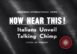 Image of chimpanzees Rome Italy, 1962, second 3 stock footage video 65675040906