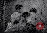 Image of chimpanzees Rome Italy, 1962, second 16 stock footage video 65675040906