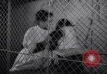 Image of chimpanzees Rome Italy, 1962, second 17 stock footage video 65675040906