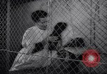 Image of chimpanzees Rome Italy, 1962, second 18 stock footage video 65675040906
