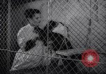 Image of chimpanzees Rome Italy, 1962, second 19 stock footage video 65675040906