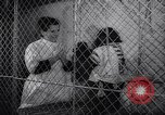 Image of chimpanzees Rome Italy, 1962, second 23 stock footage video 65675040906