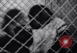 Image of chimpanzees Rome Italy, 1962, second 24 stock footage video 65675040906
