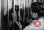 Image of chimpanzees Rome Italy, 1962, second 27 stock footage video 65675040906