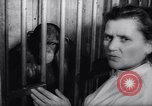 Image of chimpanzees Rome Italy, 1962, second 28 stock footage video 65675040906