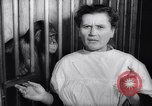 Image of chimpanzees Rome Italy, 1962, second 30 stock footage video 65675040906