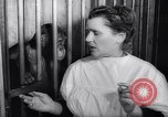 Image of chimpanzees Rome Italy, 1962, second 31 stock footage video 65675040906