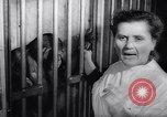 Image of chimpanzees Rome Italy, 1962, second 34 stock footage video 65675040906