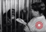 Image of chimpanzees Rome Italy, 1962, second 36 stock footage video 65675040906