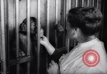 Image of chimpanzees Rome Italy, 1962, second 37 stock footage video 65675040906