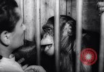 Image of chimpanzees Rome Italy, 1962, second 39 stock footage video 65675040906