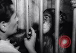 Image of chimpanzees Rome Italy, 1962, second 42 stock footage video 65675040906