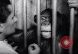 Image of chimpanzees Rome Italy, 1962, second 43 stock footage video 65675040906