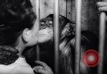 Image of chimpanzees Rome Italy, 1962, second 47 stock footage video 65675040906