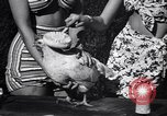Image of chicken beauty pageant Petaluma California USA, 1947, second 25 stock footage video 65675040927