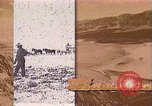 Image of Borax transport by 20 mule teams Death Valley California USA, 1894, second 59 stock footage video 65675040984