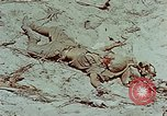 Image of dead Japanese soldiers Eniwetok Atoll Marshall Islands, 1944, second 30 stock footage video 65675041028