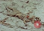 Image of dead Japanese soldiers Eniwetok Atoll Marshall Islands, 1944, second 33 stock footage video 65675041028