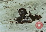 Image of dead Japanese soldiers Eniwetok Atoll Marshall Islands, 1944, second 38 stock footage video 65675041028