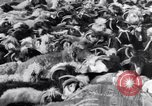 Image of Nomads Iran, 1944, second 49 stock footage video 65675041201