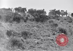 Image of General Obregon El Paso Texas USA, 1916, second 53 stock footage video 65675041207