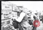 Image of Pigeons Selby England United Kingdom, 1933, second 11 stock footage video 65675041255