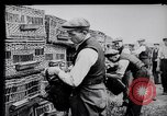 Image of Pigeons Selby England United Kingdom, 1933, second 12 stock footage video 65675041255