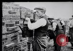 Image of Pigeons Selby England United Kingdom, 1933, second 14 stock footage video 65675041255
