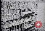 Image of Pigeons Selby England United Kingdom, 1933, second 18 stock footage video 65675041255