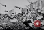 Image of Pigeons Selby England United Kingdom, 1933, second 33 stock footage video 65675041255