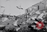 Image of Pigeons Selby England United Kingdom, 1933, second 34 stock footage video 65675041255
