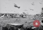 Image of Pigeons Selby England United Kingdom, 1933, second 40 stock footage video 65675041255