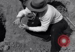 Image of Removal of ancient relics from Spiro mounds Arkansas United States USA, 1936, second 26 stock footage video 65675041281