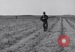 Image of Jack rabbits during dustbowl Texas United States USA, 1936, second 27 stock footage video 65675041297