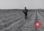 Image of Jack rabbits during dustbowl Texas United States USA, 1936, second 28 stock footage video 65675041297
