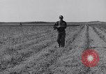 Image of Jack rabbits during dustbowl Texas United States USA, 1936, second 29 stock footage video 65675041297