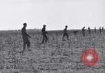 Image of Jack rabbits during dustbowl Texas United States USA, 1936, second 30 stock footage video 65675041297