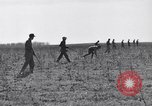 Image of Jack rabbits during dustbowl Texas United States USA, 1936, second 31 stock footage video 65675041297