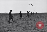 Image of Jack rabbits during dustbowl Texas United States USA, 1936, second 32 stock footage video 65675041297