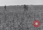 Image of Jack rabbits during dustbowl Texas United States USA, 1936, second 38 stock footage video 65675041297