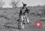 Image of Jack rabbits during dustbowl Texas United States USA, 1936, second 49 stock footage video 65675041297