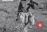 Image of Jack rabbits during dustbowl Texas United States USA, 1936, second 51 stock footage video 65675041297