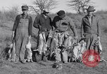 Image of Jack rabbits during dustbowl Texas United States USA, 1936, second 52 stock footage video 65675041297