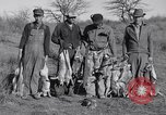 Image of Jack rabbits during dustbowl Texas United States USA, 1936, second 53 stock footage video 65675041297