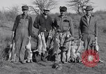 Image of Jack rabbits during dustbowl Texas United States USA, 1936, second 54 stock footage video 65675041297