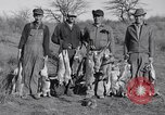 Image of Jack rabbits during dustbowl Texas United States USA, 1936, second 55 stock footage video 65675041297