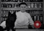 Image of Scottish Terrier New York City USA, 1936, second 10 stock footage video 65675041299