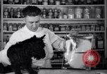 Image of Scottish Terrier New York City USA, 1936, second 17 stock footage video 65675041299