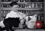 Image of Scottish Terrier New York City USA, 1936, second 18 stock footage video 65675041299