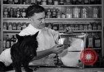 Image of Scottish Terrier New York City USA, 1936, second 19 stock footage video 65675041299